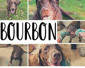 BourbonGt2.jpg