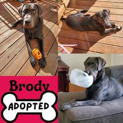 BrodyAdopt.jpg