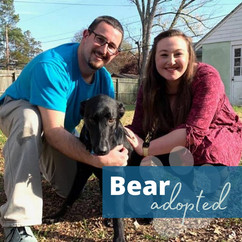 BearAdopt2020.jpg