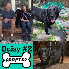 Daisy2Adopt.jpg