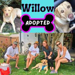 WillowAdopt.jpg