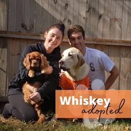 Whiskeyadopt.jpg