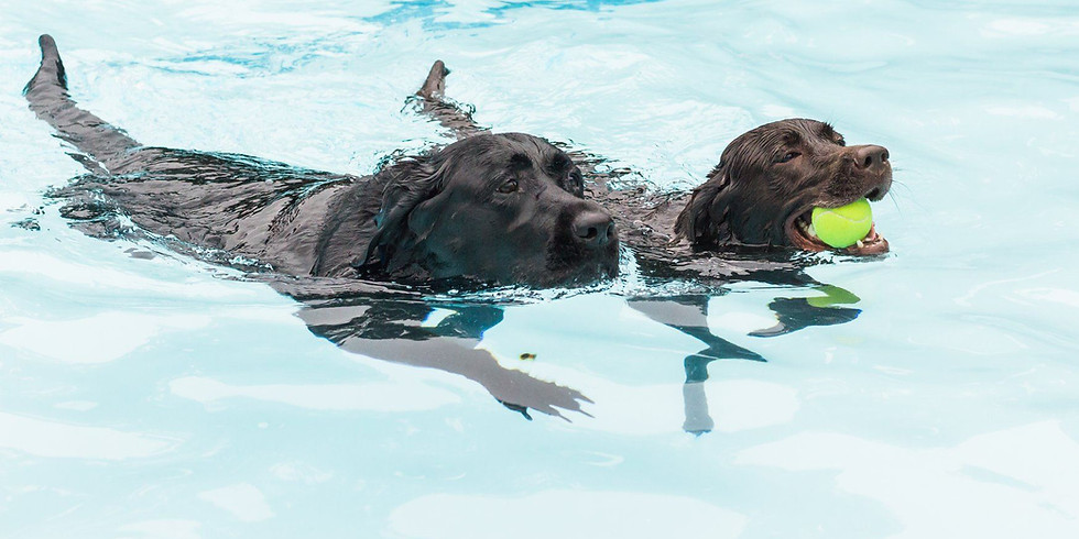 Pups in the Pool