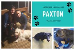 PaxtonAdopt.jpg