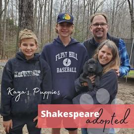 ShakespeareAdopt.jpg