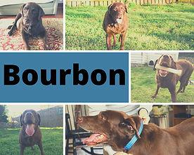 BourbonGt1.jpg