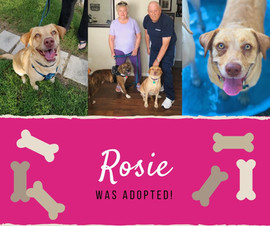 RosieAdopt.jpg