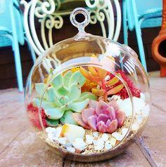 הכנת יער גשם מיניטורי בכלי זכוכית   מתנה בהכנה עצמית לראש השנה