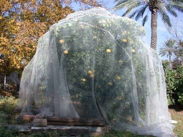 רשת נגד זבוב הים התיכון  17 מש