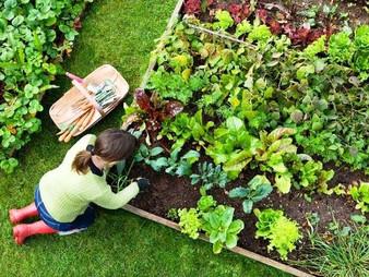 הכנת גינת ירק לחורף