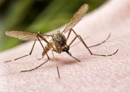דוחה יתושים טבעי