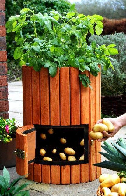 ערוגת תפוח אדמה מהודרת