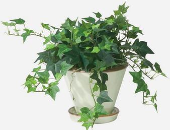 הכניסו צמחים מטהרי אוויר לביתכם