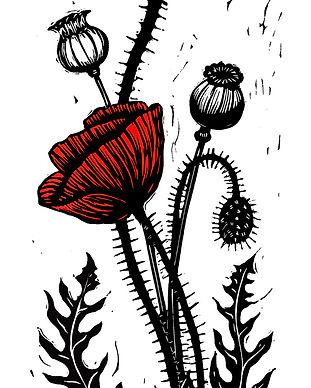 red_poppy.jpg