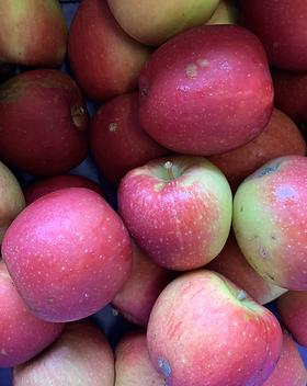 Pommes Braeburn / Vergers de la vallée / Namur / Region wallonne