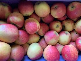 Pommes Coxybelle / Bio / Vergers de la vallée