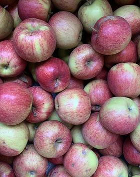 Pommes Jonagold / Vergers de la vallée
