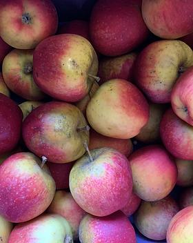 Pommes Ducasse / Bio / Vergers de la vallée