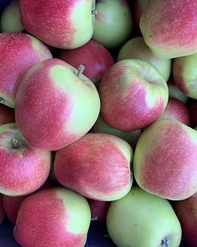 Pommes Belgica / Vergers de la vallée / Namur / Belgique