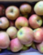 Pommes Boskoop / Vergers de la vallée / Namur / Region wallonne