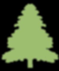 Full grown cedar