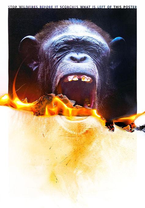 The Burning Poster Series - Chimpanzee.j