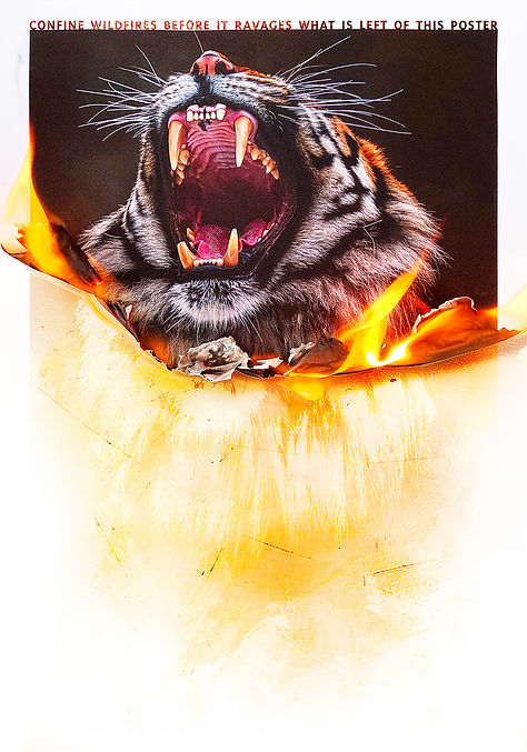 The Burning Poster Series - Tiger.jpg