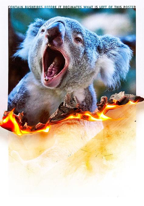 The Burning Poster Series - Koala.jpg