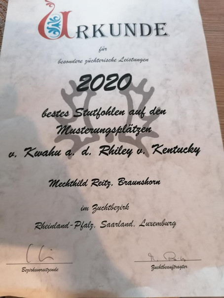 Rihanna v. Kwahu u. d. Rhiley v. Kentucky -> das am höchsten bewertete Stutfohlen in 2020