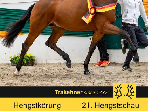Trakehner Hengstschau in Münster-Handorf: Mehr als 40 Hengste sind gemeldet!