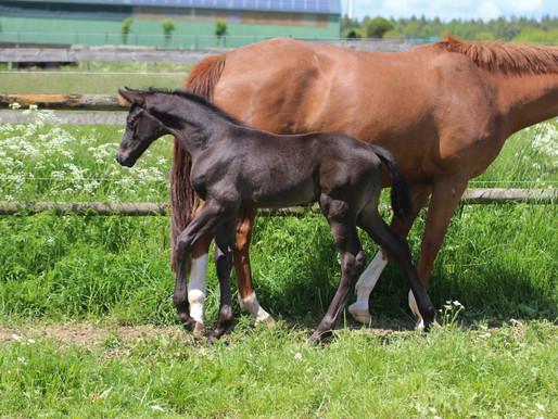 **** VERKAUFT **** Verkaufspferd Vancouver - ein Herzensbrecher, Bilder im Alter 10 Tagen bis zu 5 W