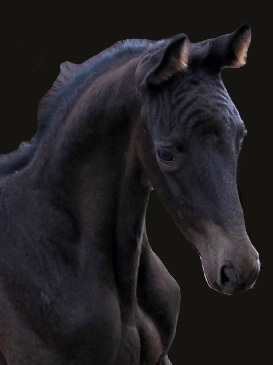 Verkaufspferde