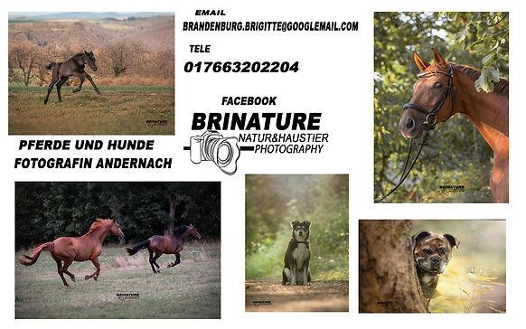 Brinature-Natur- und Haustierfotographie.jpg
