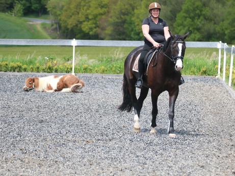 Sonne, schöne Pferde, strahlende Reiter und ein Shetty ..... Dressurlehrgang bei Eliza Tressel