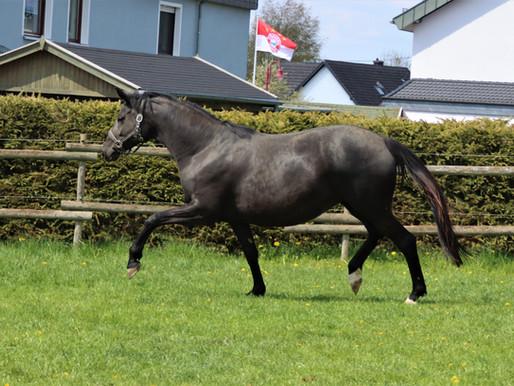 Foal on board.... bald kommt Nachwuchs Nr. 2