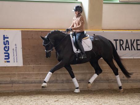 PrSt. Rajah - Landesreitpferdechampionesse 2019 - tragend v. Kasimir TSF - das Erbe Rachels - Teil 2