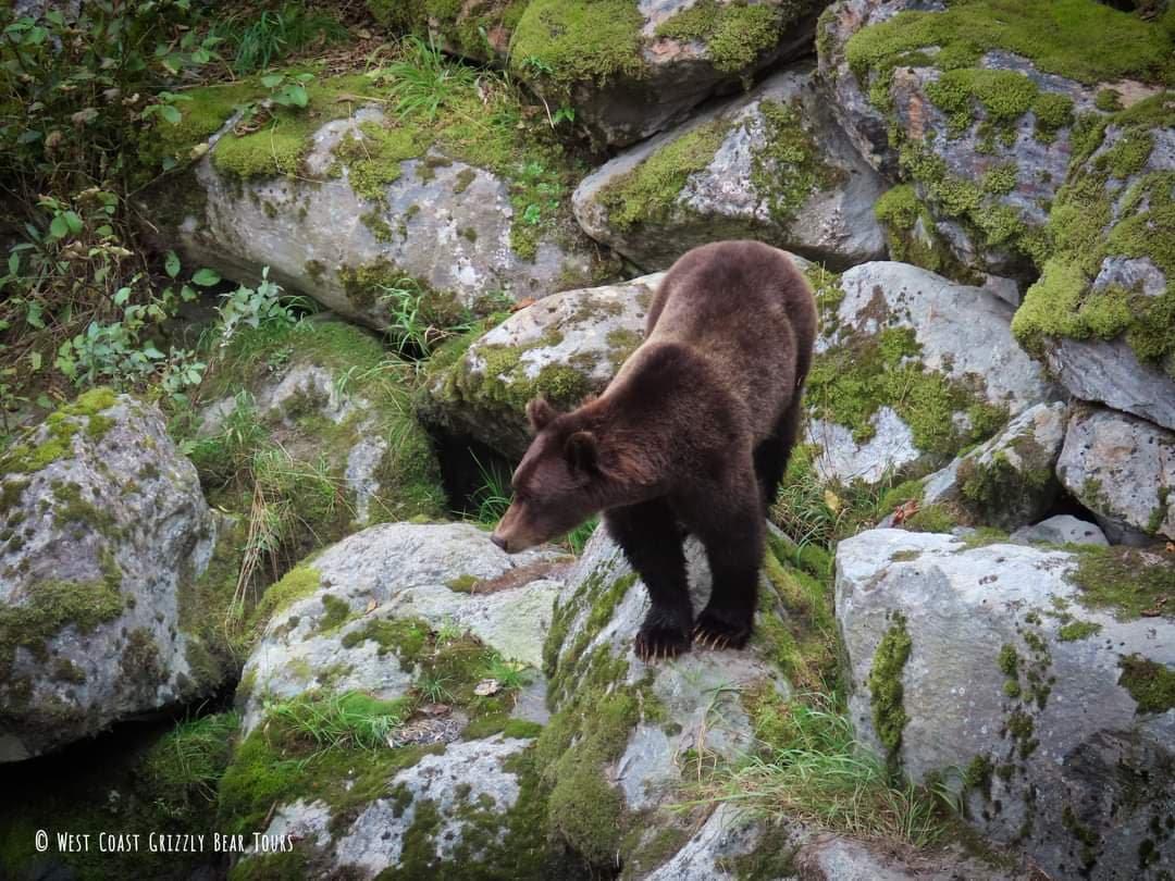 Wildlife Excursions