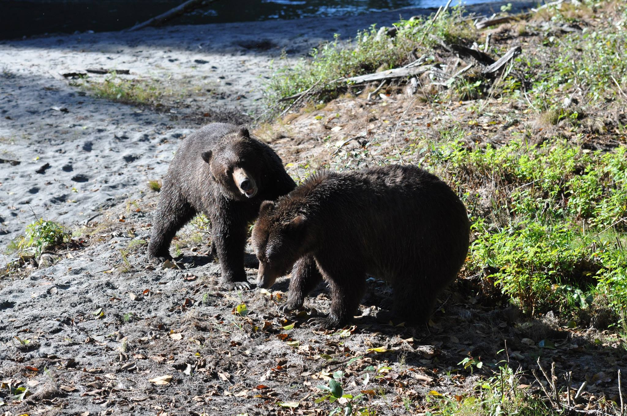 Grizzlies Together