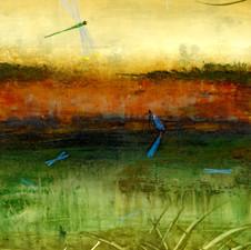 Secret Life of the Dragonflies II