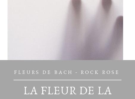Le fleur des peurs extrêmes - ROCK ROSE