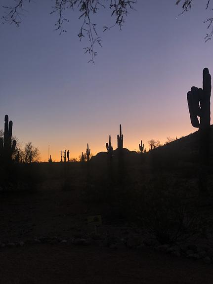 desert2.HEIC