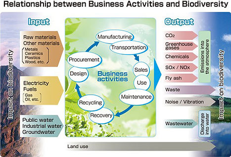Biodiversity infographic about business activities and Biodiversity