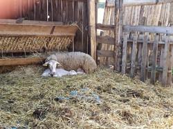 bébé qui dort auprés de maman