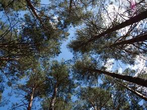 Directives « oiseaux » et « habitats » : Elargissement et précision des exigences de protection
