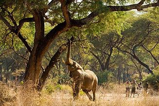 Zambia_LowerZambezi_OldMondoro_Activity_