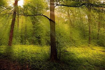 arbre foeret ete lumiere.jpg