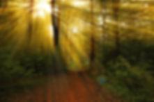 arbre foret lumiere 2.jpg