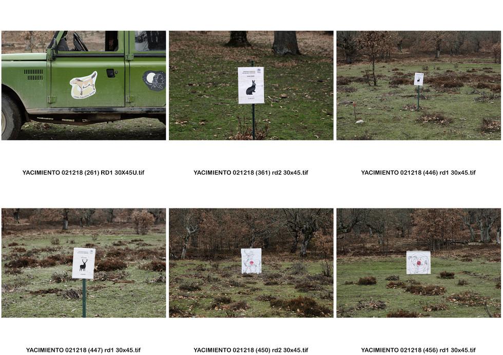 contactos zoomorfos (2).jpg