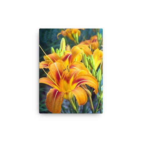 Orange Lily on Canvas