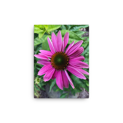 Cone Flower on Canvas